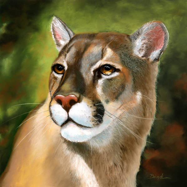 Painting - Mountain Lion by Janet Biondi