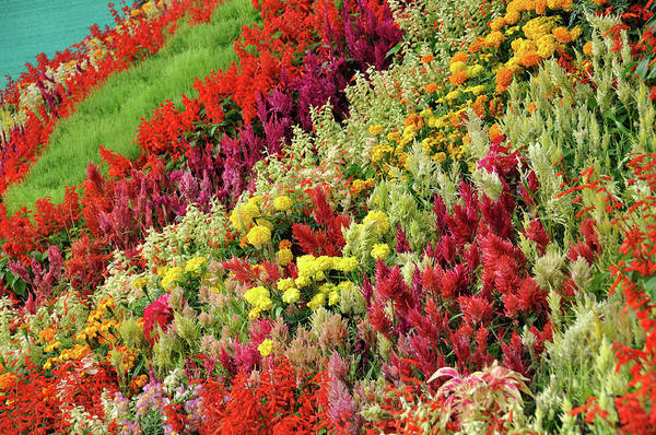 Bangalore Photograph - Mountain Of Flowers by Fameleaf Photos