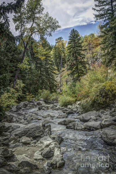 Photograph - Mountain Stream by David Waldrop