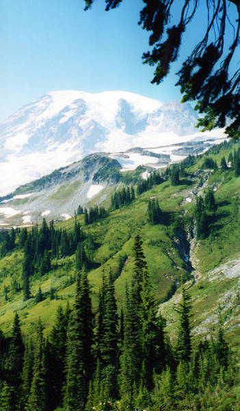 Photograph - Mt. Rainier by C Sitton