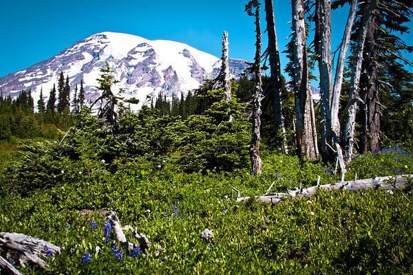 Photograph - Mt. Rainier IIi by David Patterson