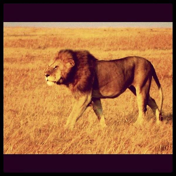 Wall Art - Photograph - Mufasa by Emily Moore