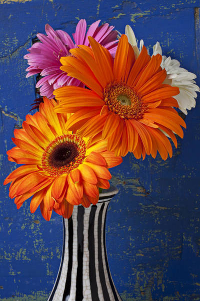 Mums Photograph - Mums In Striped Vase by Garry Gay
