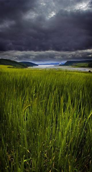 Photograph - Munlochy Bay by Joe Macrae