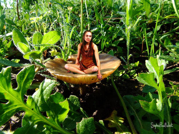 Shrooms Photograph - Mushroom Fairy by Stephen Paul West