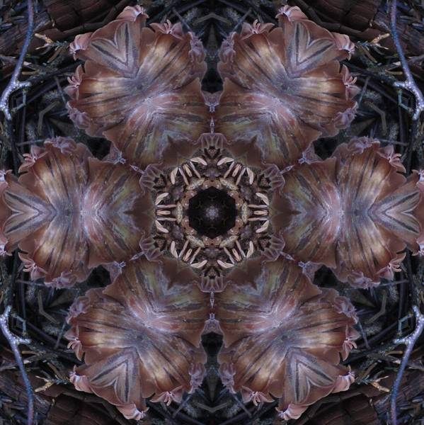 Digital Art - Mushroom With Brown Center by Trina Stephenson