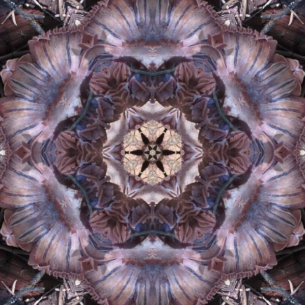 Mushroom With Star Center Art Print