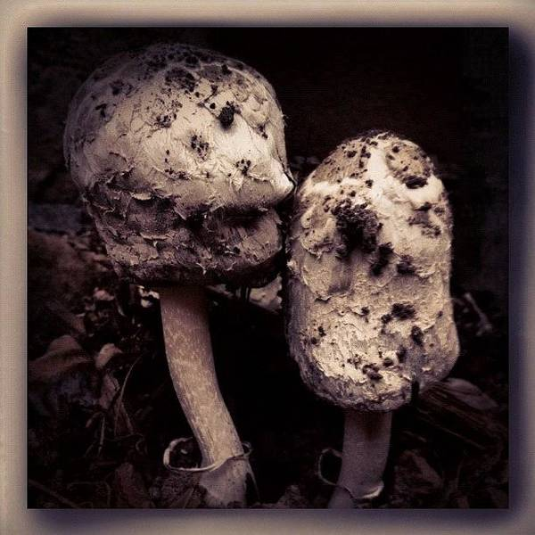 Monochrome Photograph - Mushrooms by Paul Cutright