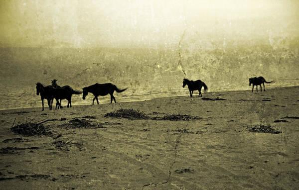 Pony Photograph - Mustangs by Betsy Knapp