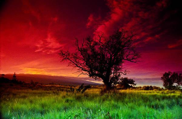 Photograph - My Backyard by Randy Sylvia