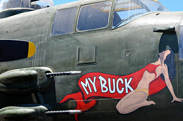 Wall Art - Photograph - My Buck 2 by Fraida Gutovich