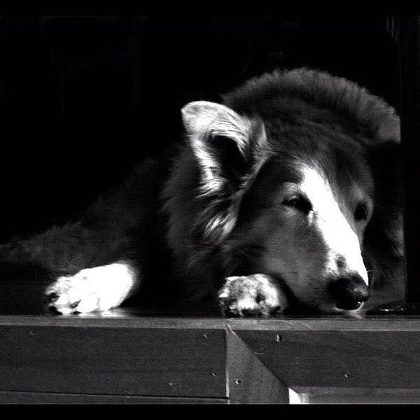 Death Wall Art - Photograph - My Dog Before She Passed by Jamiee Spenncer