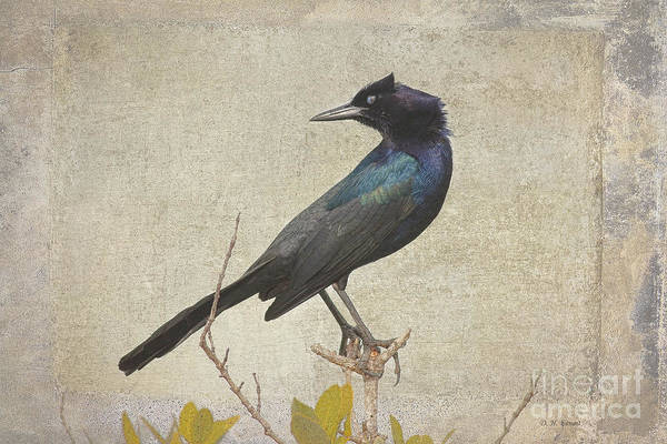 Photograph - My Grackle Friend by Deborah Benoit
