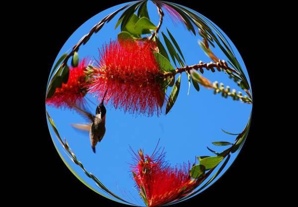 Photograph - My World - Hummingbirds by Lynn Bauer