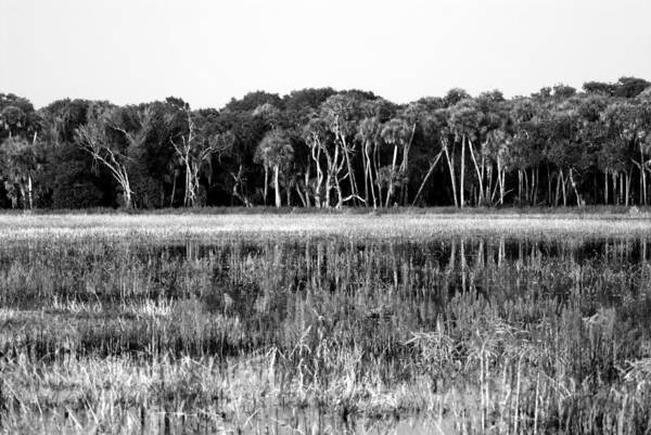 Thompson River Photograph - Myakka River Wilderness by David Lee Thompson