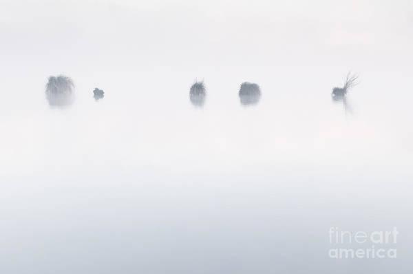 Niebla Wall Art - Photograph - Mystery In The Mist by David Gimenez Aldalur