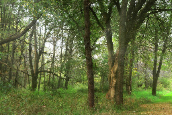 Photograph - Mystic Forest by Scott Hovind