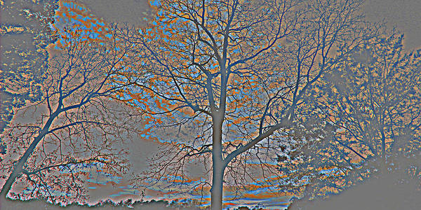 Photograph - Mystic Gray Trees by Sheila Kay McIntyre