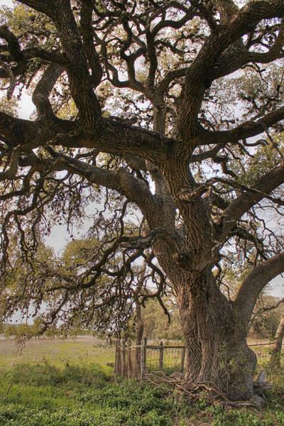 Photograph - Mystical Tree II by Sarah Broadmeadow-Thomas