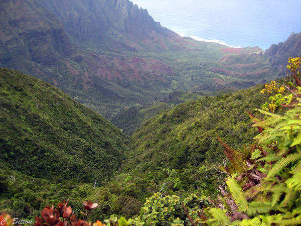 Photograph - Na Pali Ferns by C Sitton
