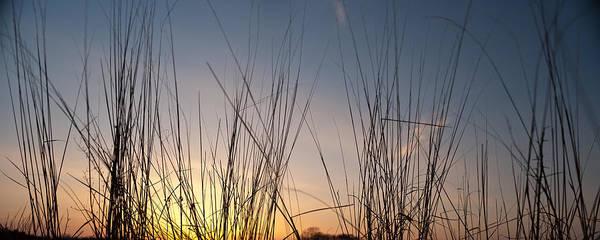 Wall Art - Photograph - Nachusa Grasslands Sunset by Steve Gadomski
