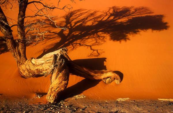 Pyrography - Namibia 2 by Mauro Celotti