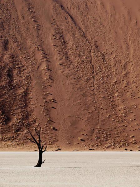 Sossusvlei Photograph - Namibia Solitaire by Nina Papiorek