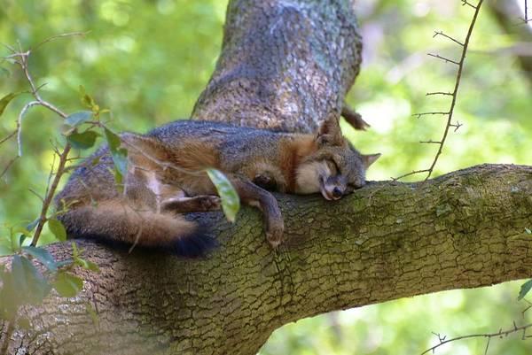 Photograph - Nap Time by Ralph Jones