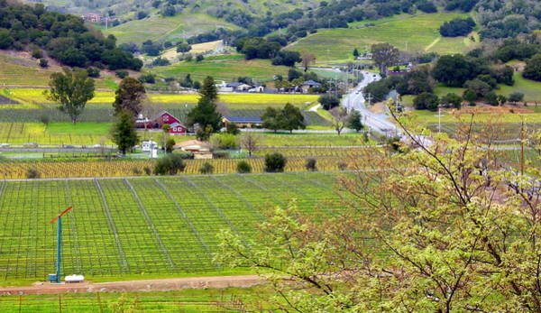 Photograph - Napa Valley Overlook by Jeff Lowe