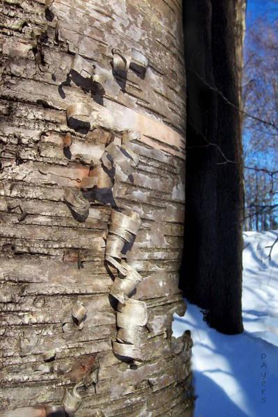 Blue Wall Art - Mixed Media - Natural Curling Ribbon by Paula Ayers