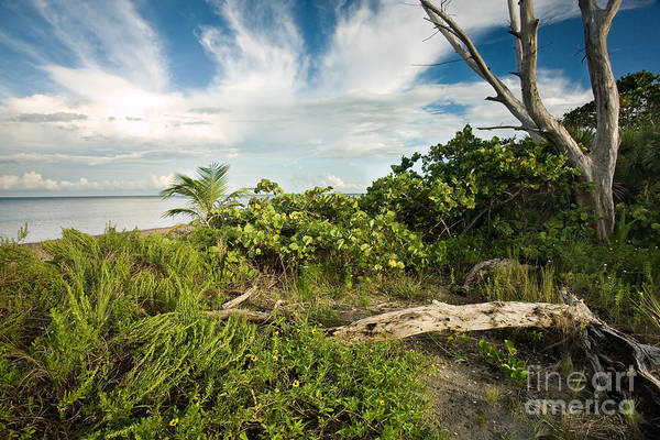 Wild Grape Photograph - Natural Florida Coastline by Matt Tilghman