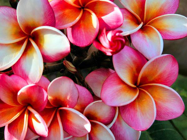 Photograph - Natural Plumeria Wreath by Lynn Bauer