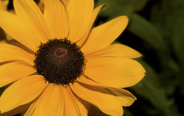 Photograph - Nature Art In Yellow by Milena Ilieva