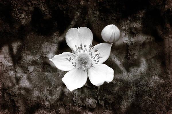 Photograph - Nature Art by Milena Ilieva