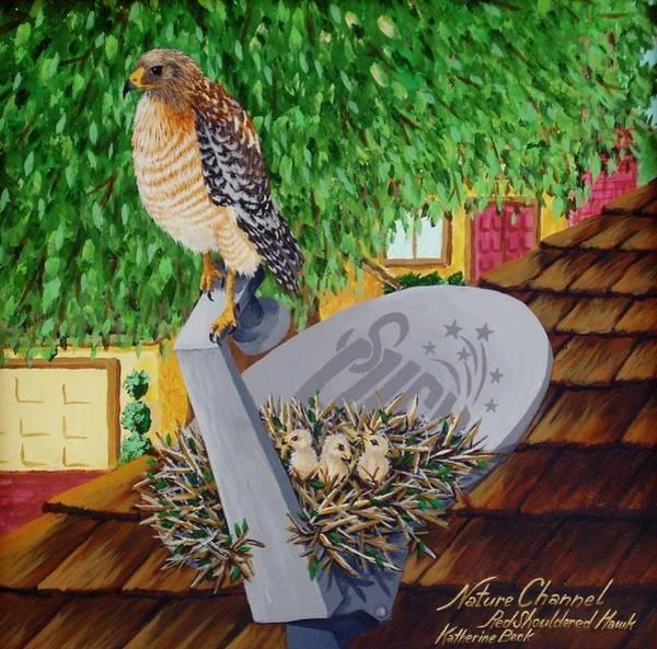 Wall Art - Painting - Nature Channel- Red Shouldered Hawk by Katherine Young-Beck