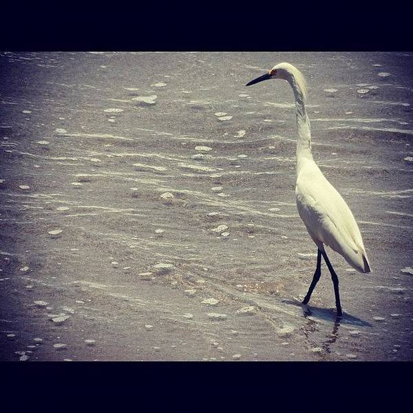 Egret Photograph - Nature On The Beach At The by Travel Designed