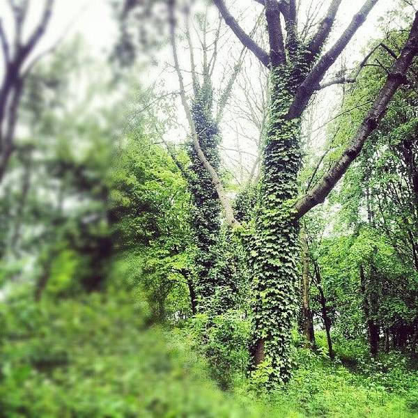 Wall Art - Photograph - #nature #trees #tree #green #salford by Abdelrahman Alawwad
