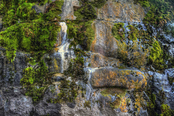 Photograph - Nature's Abstract by Brad Granger