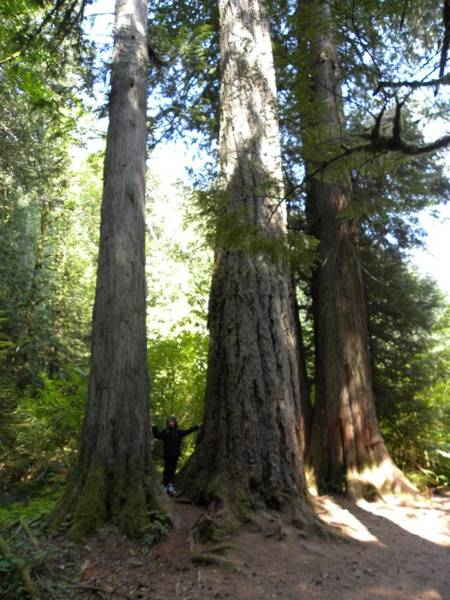 Photograph - Nature's Giants by Peggy  McDonald