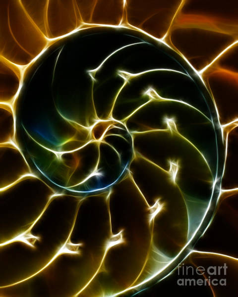 Photograph - Nautilus Shell - Electric - Yellow by Wingsdomain Art and Photography