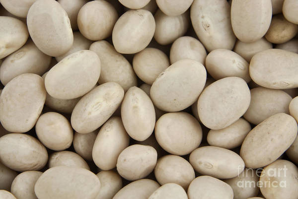 Wall Art - Photograph - Navy Beans by Blink Images