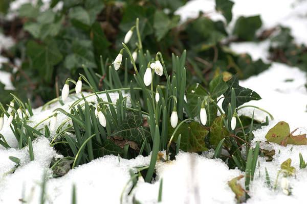 Photograph - Nearly Spring by David Birchall