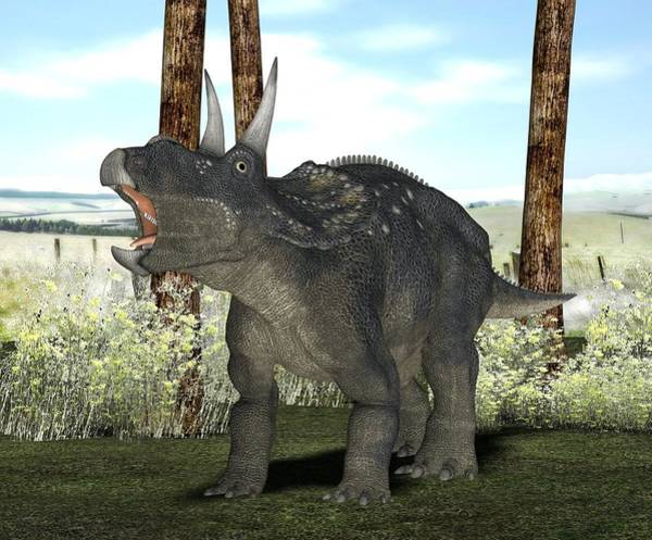 Diceratops Photograph - Nedoceratops Dinosaur, Artwork by Friedrich Saurer