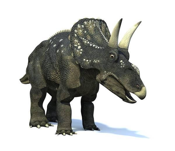 Diceratops Photograph - Nedoceratops Dinosaur, Artwork by Roger Harris