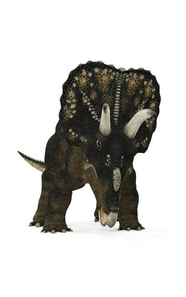 Diceratops Photograph - Nedoceratops Dinosaur by Walter Myers