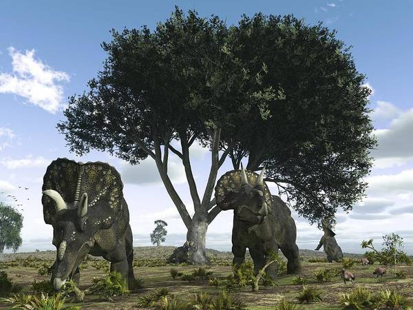 Diceratops Photograph - Nedoceratops Dinosaurs, Artwork by Walter Myers