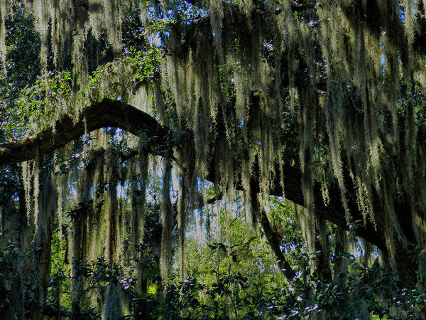 Photograph - New Orleans Tm 0012 by Lance Vaughn