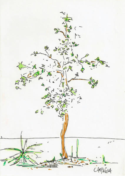 Painting - New Tree by Teddy Campagna