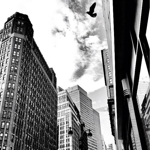 Black And White Photograph - New York City - In Flight by Vivienne Gucwa