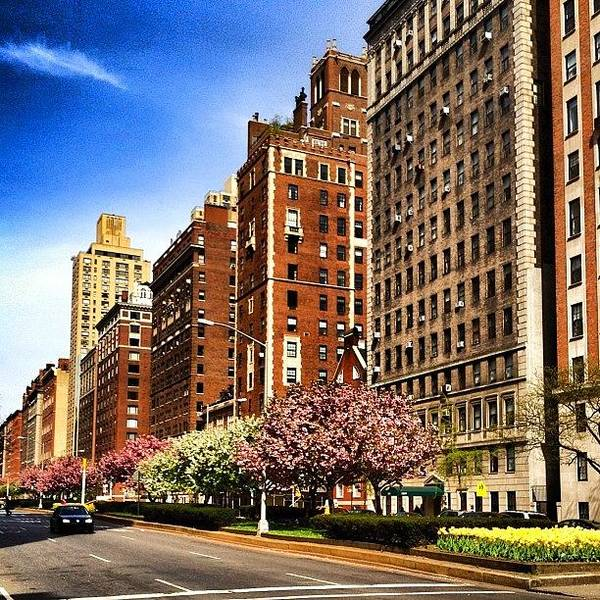 Blossom Photograph - New York City Cherry Blossoms  by Vivienne Gucwa